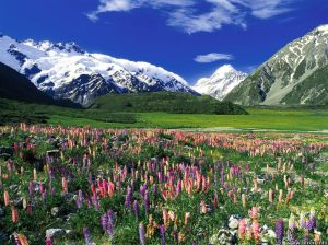new-zeland-zealand-the-free-spring-meadow