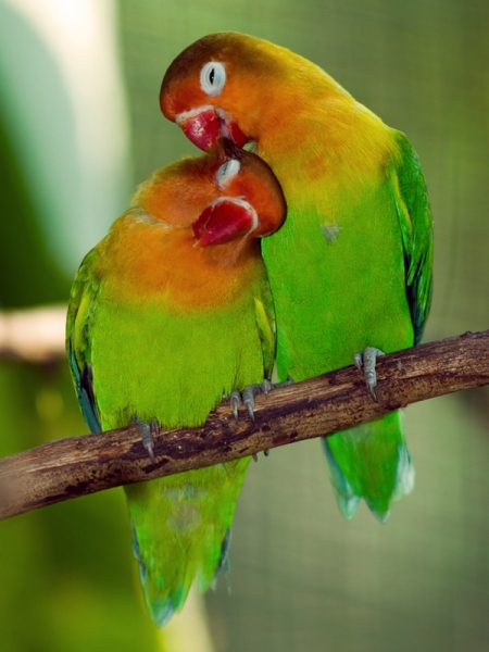 zzzzlovebirds